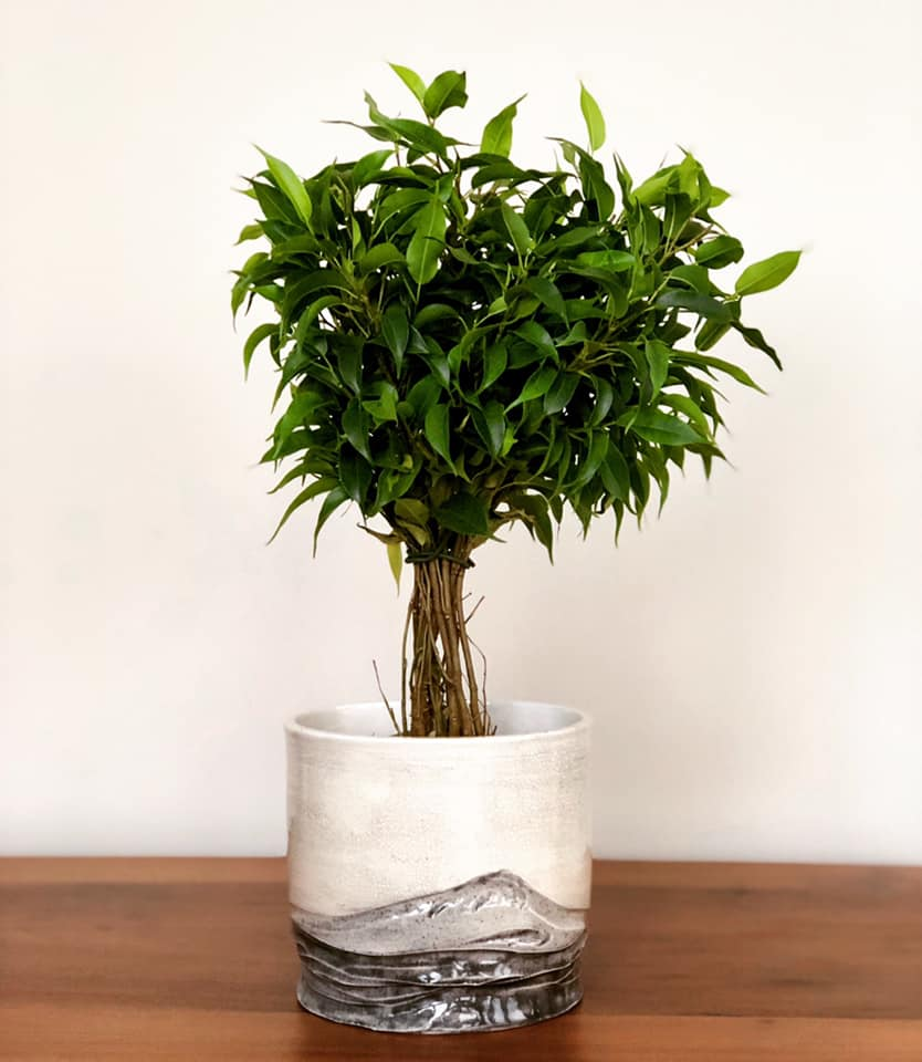 The Best Indoor Plants For Your Home | Signature Premier
